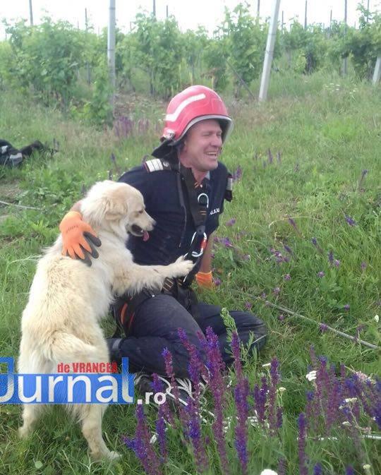 salvare caine2 - Foto impresionant: cum își manifestă un câine recunoștința față de salvatorul său