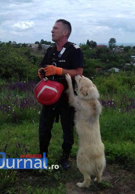 salvare caine3 - Foto impresionant: cum își manifestă un câine recunoștința față de salvatorul său
