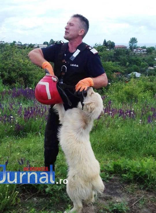 salvare caine4 - Foto impresionant: cum își manifestă un câine recunoștința față de salvatorul său