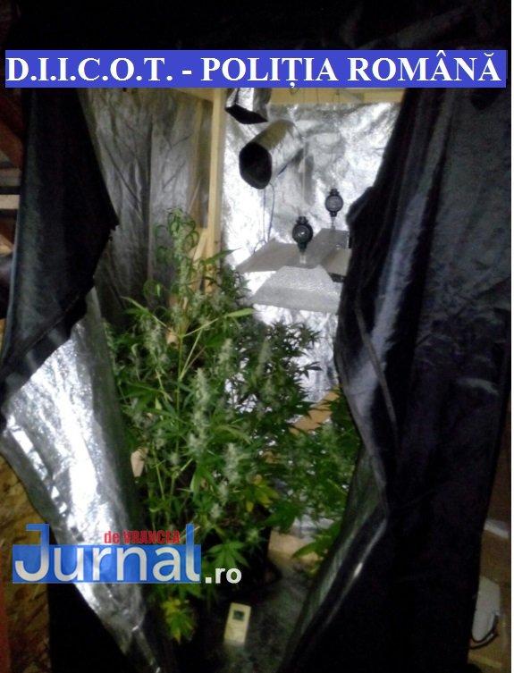 droguri2 - ULTIMĂ ORĂ: Focșănean prins în flagrant cu o jumătate de kg de hașiș asupra lui