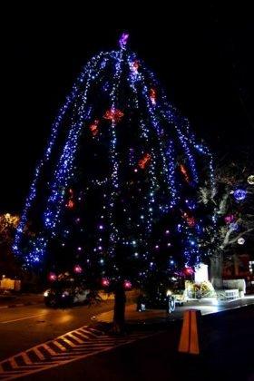 Iluminat sarbatori 1 280x420 - FOTO: Primăria Orașului Panciu a aprins luminile din bradul de Crăciun
