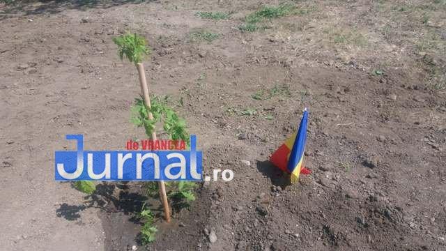 plantare-de-stejari-proiect-parcul-100-1