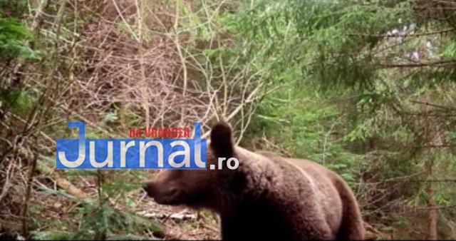 urs-parcul-natural-putna-vrancea