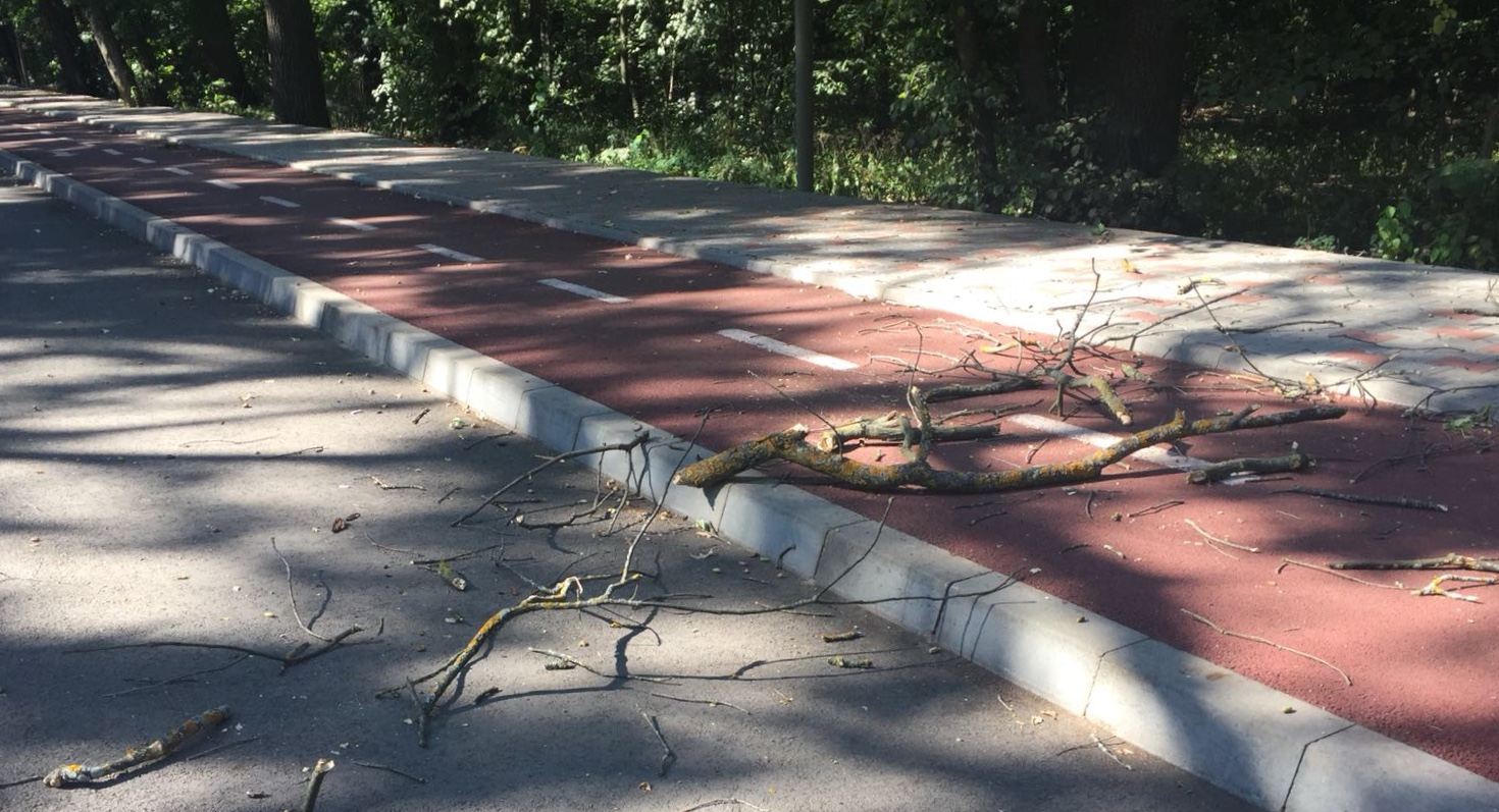 28456555 5EEB 4FDE 87B6 E12BE7D7E250 - FOTO: ATENȚIE PĂRINȚI! Se rup copacii în Crângul Petrești!