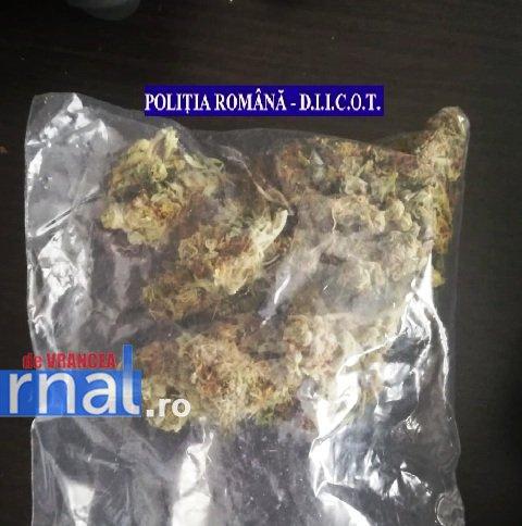 droguri bani 3 - Percheziții la traficanți și consumatori de droguri