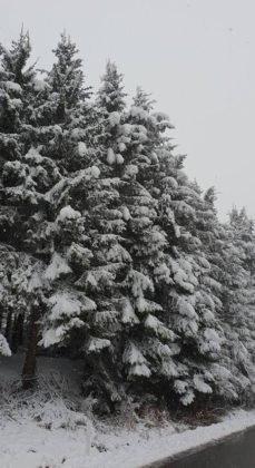 zapada vrancea2 229x420 - FOTO: La munte ninge ca-n povești! Frig și ninsori până duminică