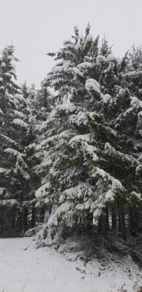 zapada vrancea3 204x420 - FOTO: La munte ninge ca-n povești! Frig și ninsori până duminică