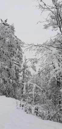 zapada vrancea4 204x420 - FOTO: La munte ninge ca-n povești! Frig și ninsori până duminică