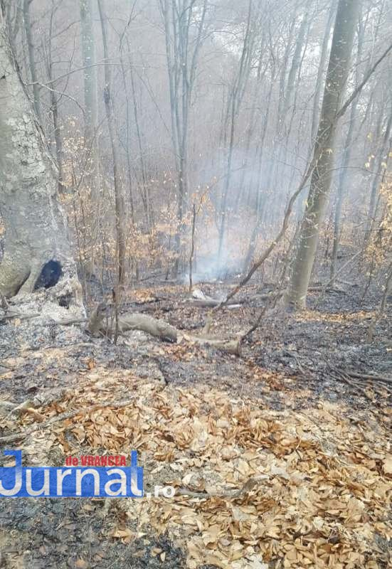incendii-vegetatie1
