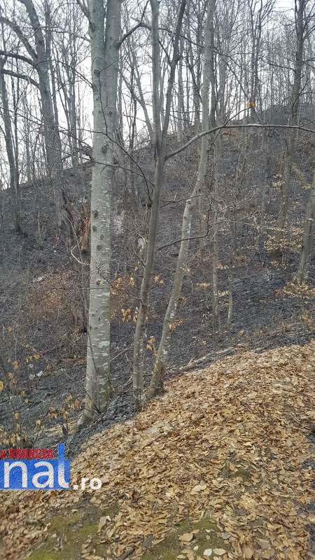 incendii vegetatie2 - FOTO: Incendii în tot județul! Misiuni de foc pentru pompierii vrânceni