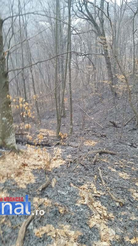 incendii vegetatie3 - FOTO: Incendii în tot județul! Misiuni de foc pentru pompierii vrânceni