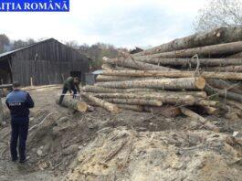 taieri-ilegale-lemne