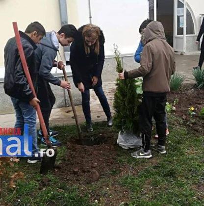 elevi adjud plantare arbusti magnolii1 416x420 - FOTO: Elevii unei școli din Adjud au plantat arbuști de tuia și magnolii