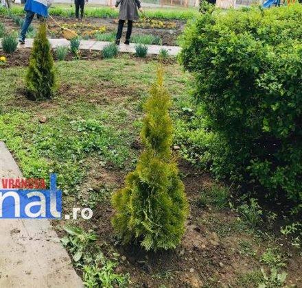 elevi adjud plantare arbusti magnolii3 440x420 - FOTO: Elevii unei școli din Adjud au plantat arbuști de tuia și magnolii
