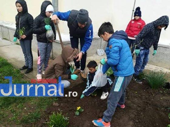 elevi adjud plantare arbusti magnolii5 560x420 - FOTO: Elevii unei școli din Adjud au plantat arbuști de tuia și magnolii