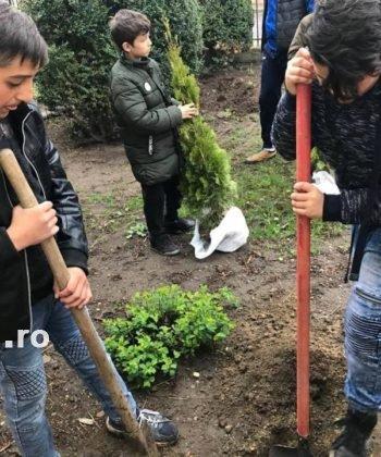 elevi adjud plantare arbusti magnolii6 350x420 - FOTO: Elevii unei școli din Adjud au plantat arbuști de tuia și magnolii
