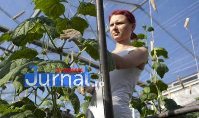 prima de comercializare 1 - Ion Ștefan: Primă de comercializare de 200 euro/tonă pentru produsele agricole primare comercializate către unități de procesare