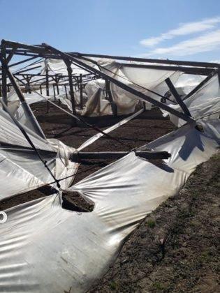 solariu 2 315x420 - FOTO-Ion Ștefan: Prefectura și Direcția Agricolă Vrancea să urgenteze demersurile pentru acordarea despăgubirilor către legumicultorii din Țifești, afectați de fenomene meteo extreme