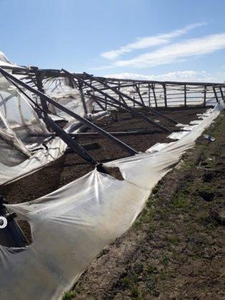 solariu 3 315x420 - FOTO-Ion Ștefan: Prefectura și Direcția Agricolă Vrancea să urgenteze demersurile pentru acordarea despăgubirilor către legumicultorii din Țifești, afectați de fenomene meteo extreme