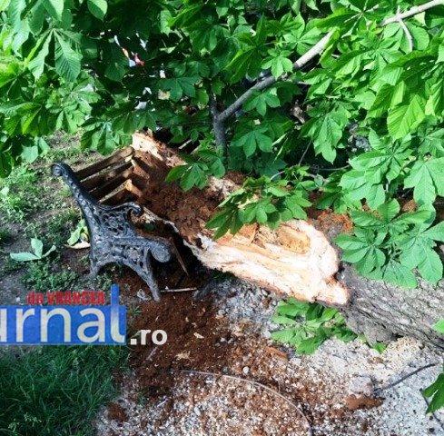 copac-cazut-focsani2