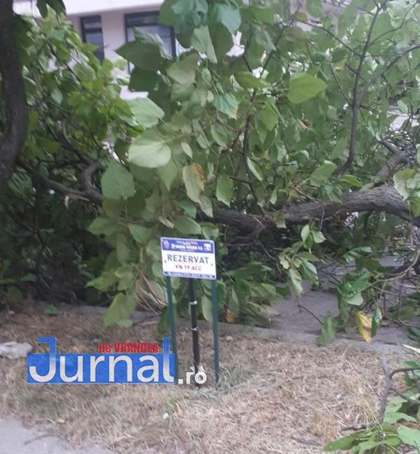 copac rup de vant1 - FOTO-ULTIMĂ ORĂ: Copac rupt de vânt în Focșani
