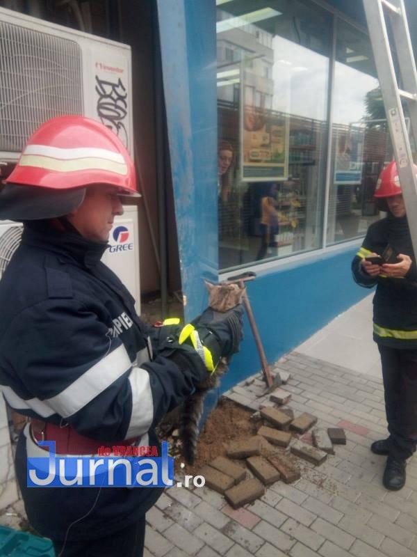 pisica salvata de pompieri2 - FOTO: Salvată de miorlăit! Pisicuță captivă între fațada unui magazin și peretele fals, salvată de pompieri