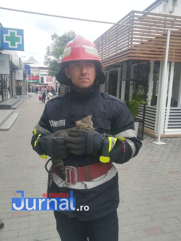 pisica salvata de pompieri3 - FOTO: Salvată de miorlăit! Pisicuță captivă între fațada unui magazin și peretele fals, salvată de pompieri