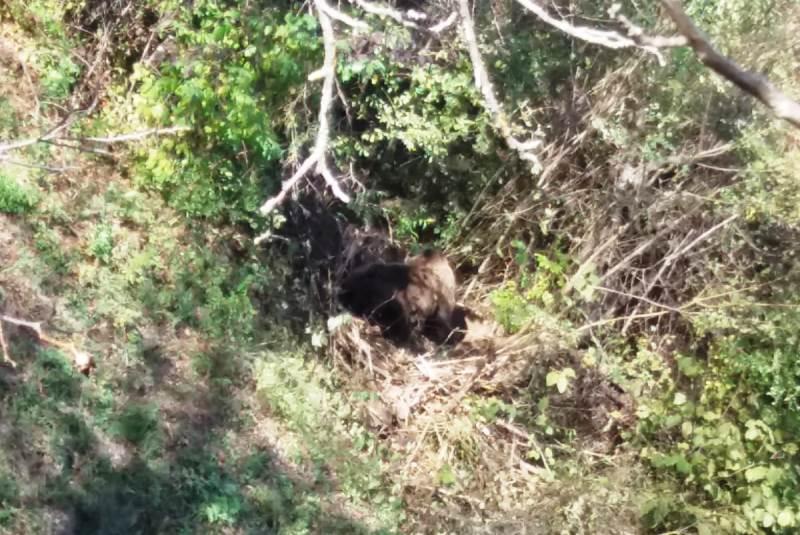 urs prin in gard2 - ACUM: Urs găsit captiv într-un gard la Valea Sării