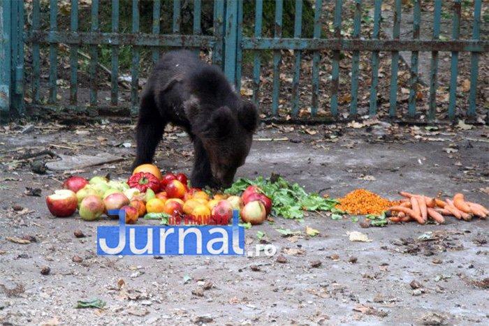"""urs 5 picioare 3 - FOTO: Povestea EMOȚIONANTĂ a ursulețului botezat """"5 picioare"""""""
