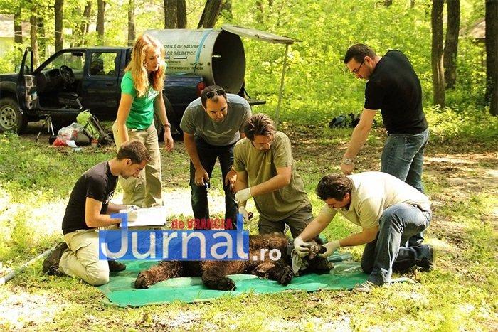 """urs 5 picioare 5 - FOTO: Povestea EMOȚIONANTĂ a ursulețului botezat """"5 picioare"""""""