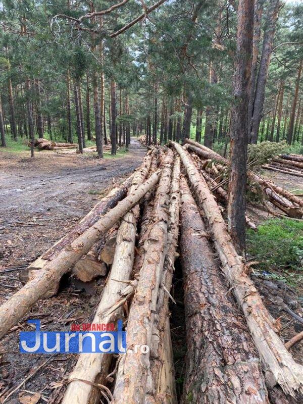 padure 1 - Ce spun autoritățile despre tăierile de pădure din punctele Gălăciuc și Babovici, aflate pe raza comunei Tulnici!