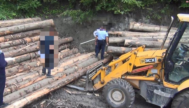 controale lemn 1 - Patru persoane duse la audieri și lemne în valoare de peste 50.000 lei confiscate, în urma acțiunii de ieri