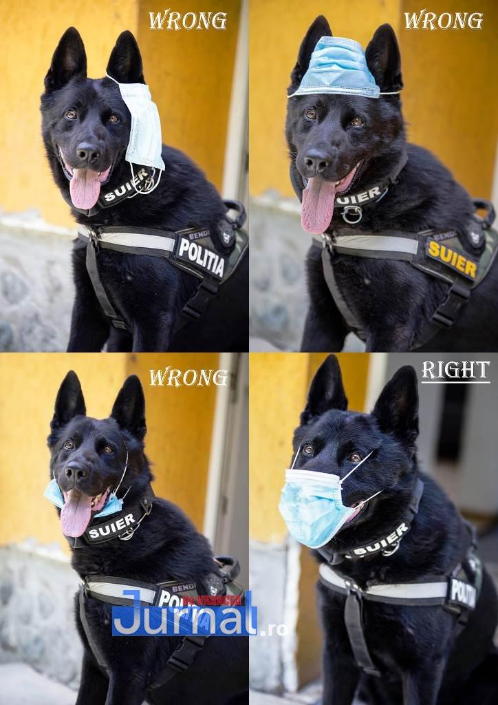 """fotografie mai caine suier - FOTO VIRAL: Câinele polițist """"Șuier"""" vedetă pe Facebook"""