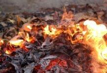 foc frunze 218x150 - Jurnal de Vrancea